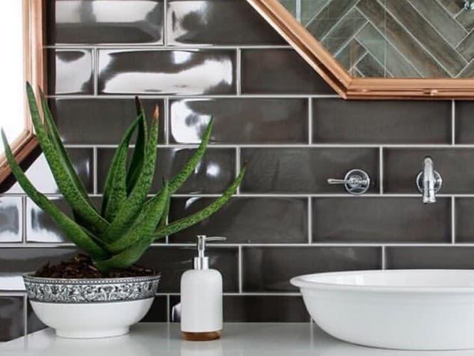 Какие растения подходят для ванной комнаты со сплошными стенами