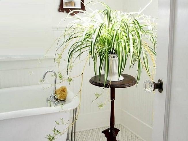 Растения для помещения без окон