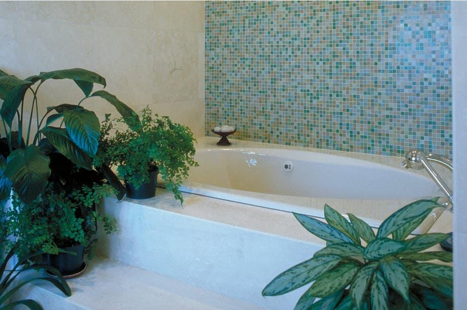 растения для ванной комнаты без окна